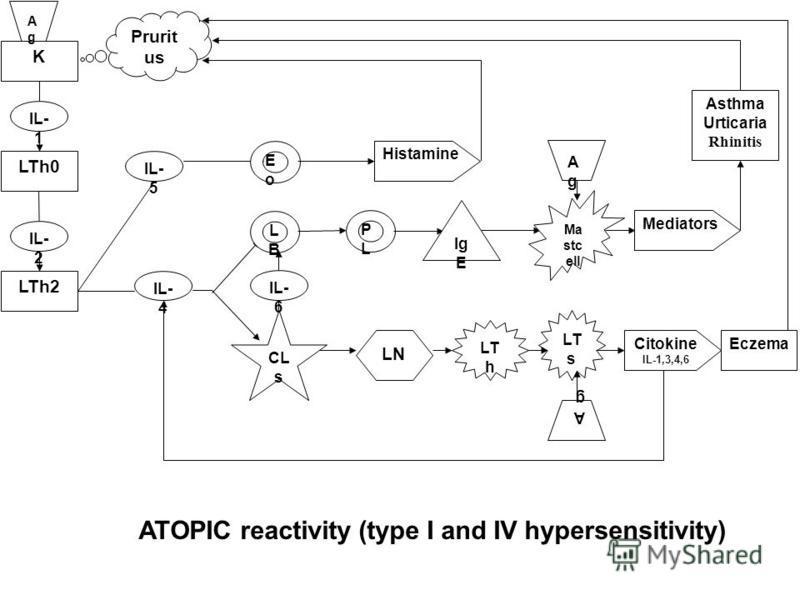 K LTh0 LTh2 EoEo LBLB PLPL Ma stc ell LT h Eczema IL- 1 Prurit us AgAg IL- 2 IL- 5 Histamine IL- 4 Ig E Mediators Asthma Urticaria Rhinitis CL s IL- 6 LNLN LT s Citokine IL-1,3,4,6 AgAg AgAg ATOPIC reactivity (type I and IV hypersensitivity)