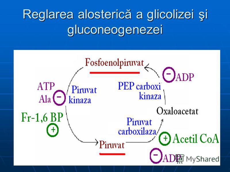 Reglarea alosterică a glicolizei şi gluconeogenezei
