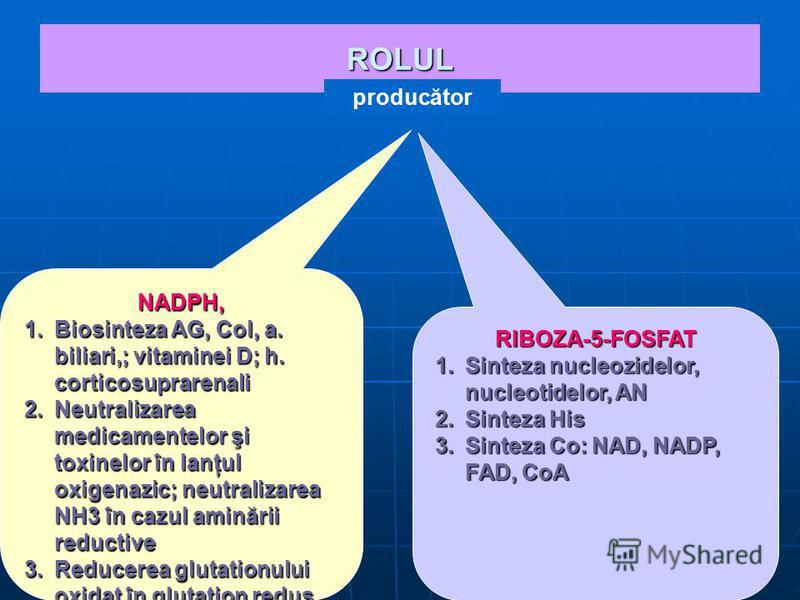 ROLUL NADPH, 1.Biosinteza AG, Col, a. biliari,; vitaminei D; h. corticosuprarenali 2.Neutralizarea medicamentelor şi toxinelor în lanţul oxigenazic; neutralizarea NH3 în cazul aminării reductive 3.Reducerea glutationului oxidat în glutation redus. RI