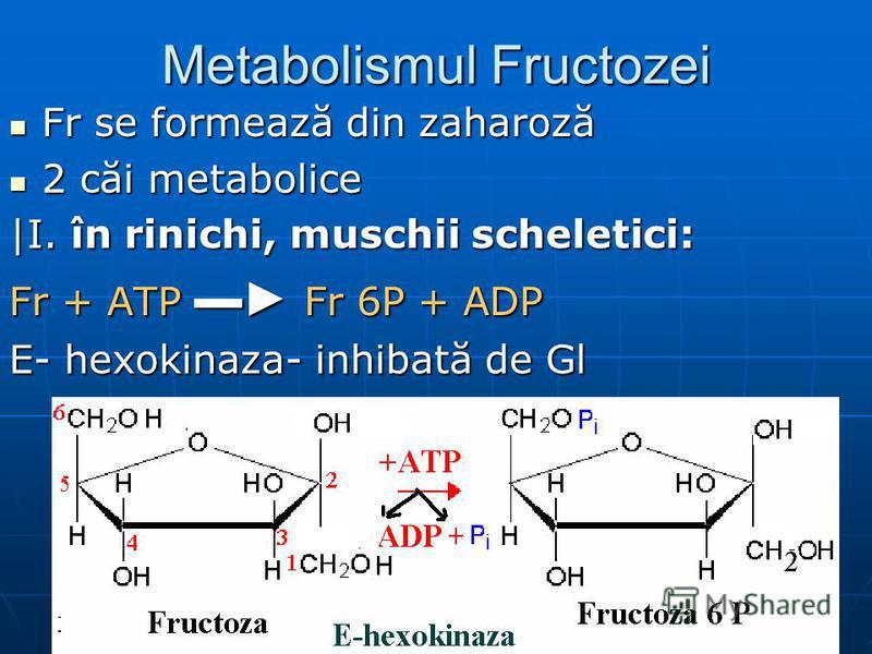 Metabolismul Fructozei Fr se formează din zaharoză Fr se formează din zaharoză 2 căi metabolice 2 căi metabolice |I. în rinichi, muschii scheletici: Fr + ATP Fr 6P + ADP E- hexokinaza- inhibată de Gl