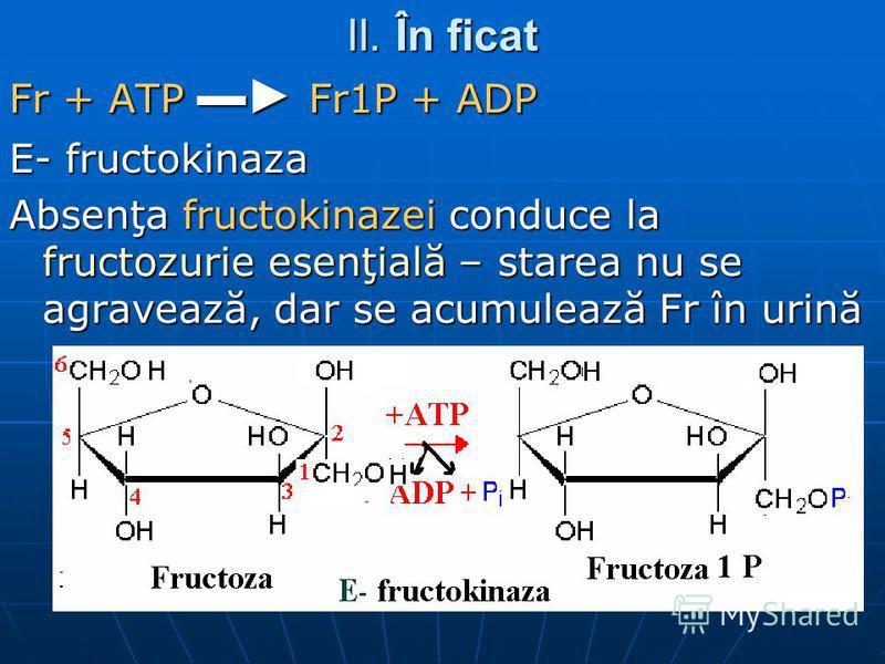II. În ficat Fr + ATP Fr1P + ADP E- fructokinaza Absenţa fructokinazei conduce la fructozurie esenţială – starea nu se agravează, dar se acumulează Fr în urină