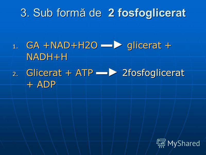 3. Sub formă de 2 fosfoglicerat 1. GA +NAD+H2O glicerat + NADH+H 2. Glicerat + ATP 2fosfoglicerat + ADP