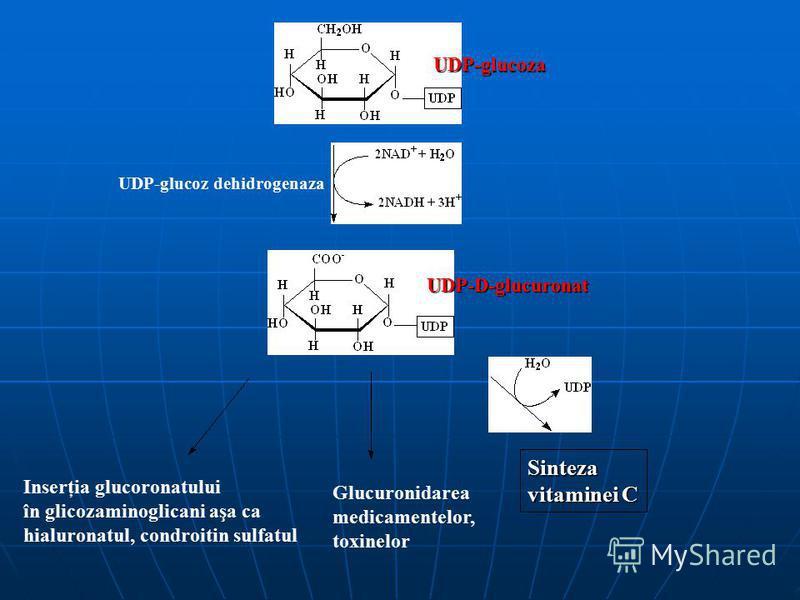 UDP-glucoz dehidrogenaza UDP-glucoza UDP-D-glucuronat Inserţia glucoronatului în glicozaminoglicani aşa ca hialuronatul, condroitin sulfatul Glucuronidarea medicamentelor, toxinelor Sinteza vitaminei C