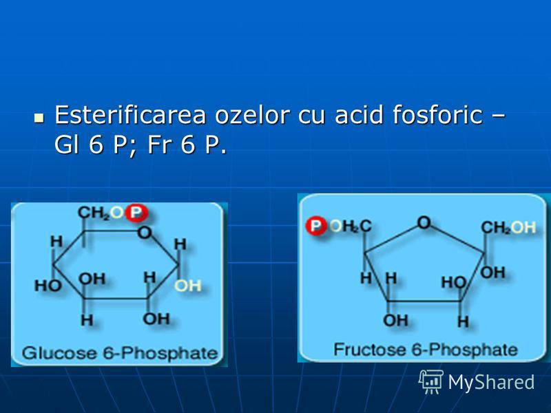 Esterificarea ozelor cu acid fosforic – Gl 6 P; Fr 6 P. Esterificarea ozelor cu acid fosforic – Gl 6 P; Fr 6 P.