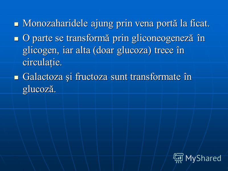 Monozaharidele ajung prin vena portă la ficat. Monozaharidele ajung prin vena portă la ficat. O parte se transformă prin gliconeogeneză în glicogen, iar alta (doar glucoza) trece în circulaţie. O parte se transformă prin gliconeogeneză în glicogen, i