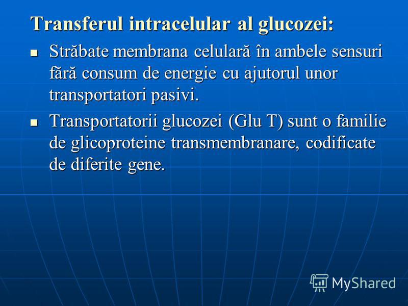Transferul intracelular al glucozei: Străbate membrana celulară în ambele sensuri fără consum de energie cu ajutorul unor transportatori pasivi. Străbate membrana celulară în ambele sensuri fără consum de energie cu ajutorul unor transportatori pasiv