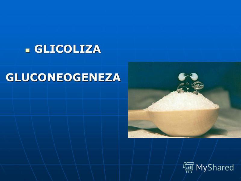 GLICOLIZA GLICOLIZAGLUCONEOGENEZA