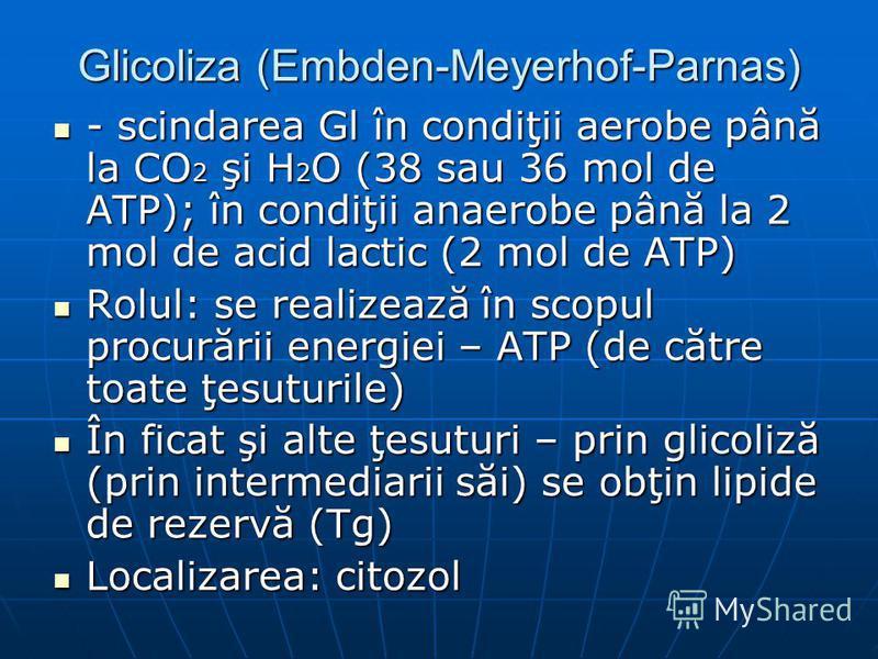 Glicoliza (Embden-Meyerhof-Parnas) - scindarea Gl în condiţii aerobe până la CO 2 şi H 2 O (38 sau 36 mol de ATP); în condiţii anaerobe până la 2 mol de acid lactic (2 mol de ATP) - scindarea Gl în condiţii aerobe până la CO 2 şi H 2 O (38 sau 36 mol
