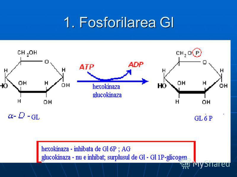 1. Fosforilarea Gl