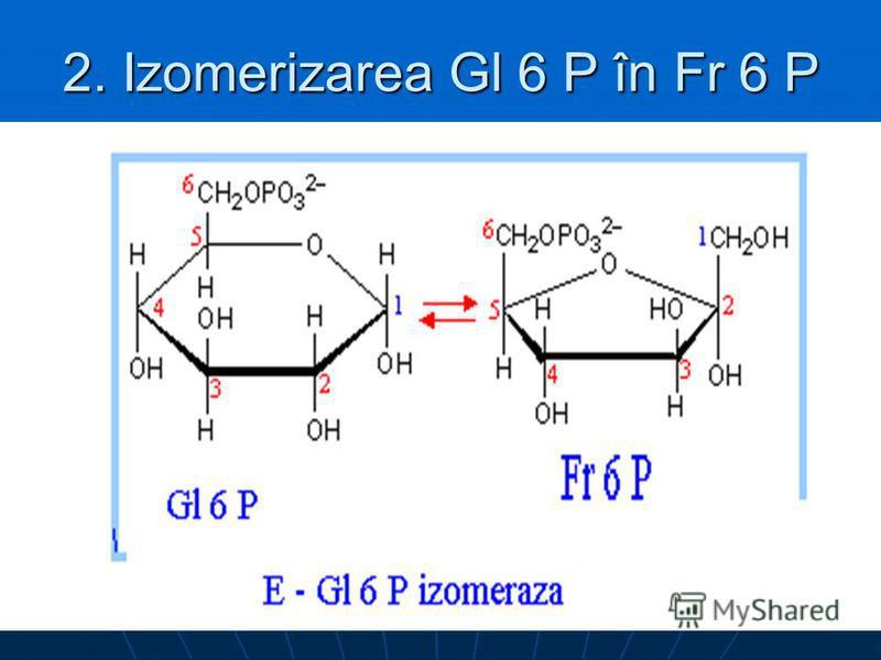 2. Izomerizarea Gl 6 P în Fr 6 P