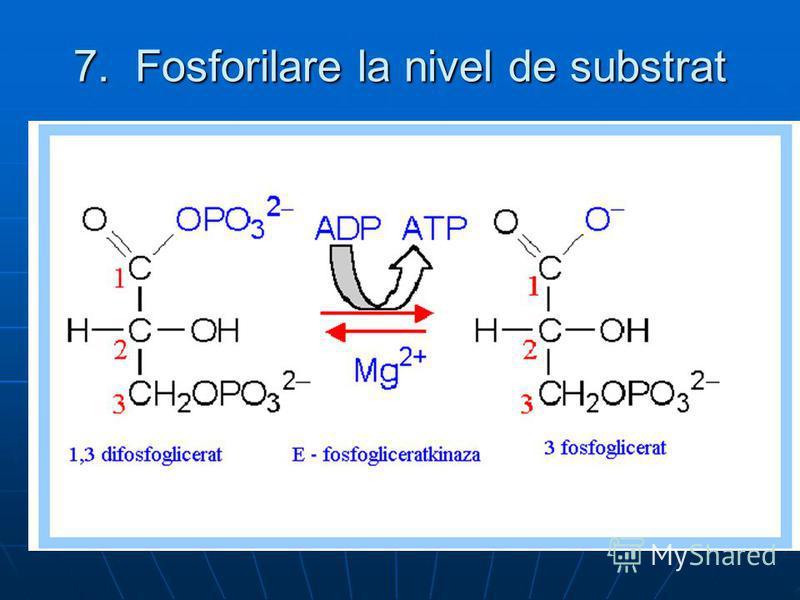 7. Fosforilare la nivel de substrat