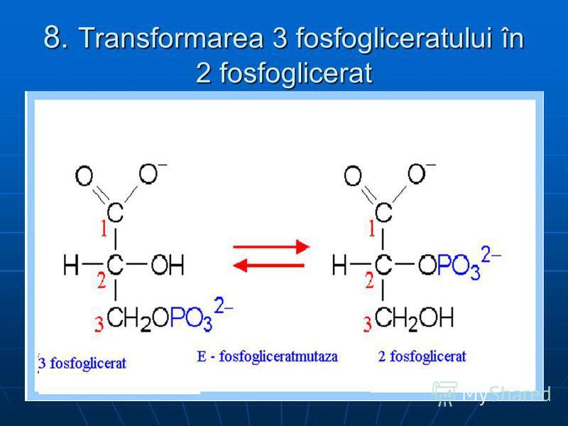 8. Transformarea 3 fosfogliceratului în 2 fosfoglicerat