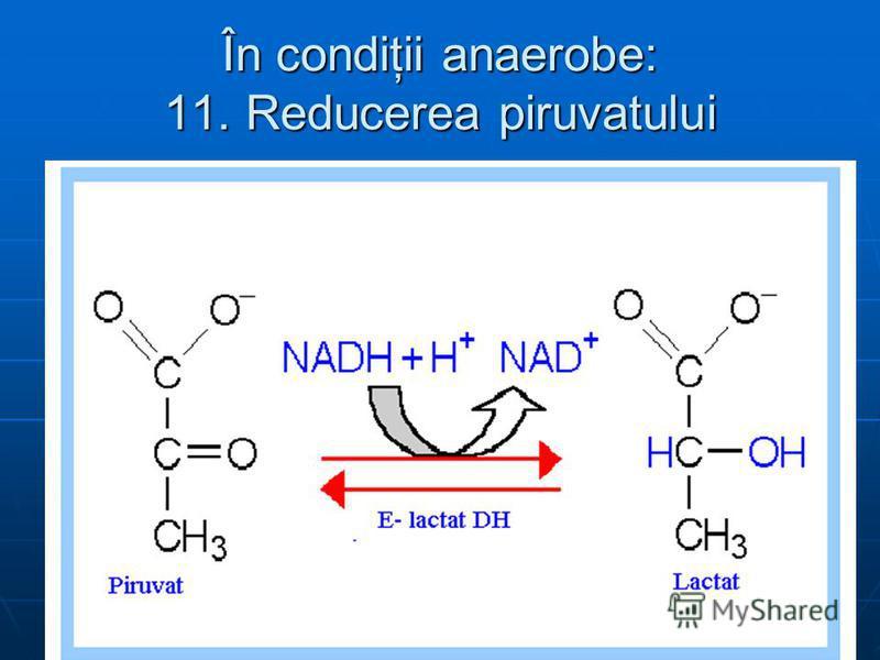 În condiţii anaerobe: 11. Reducerea piruvatului