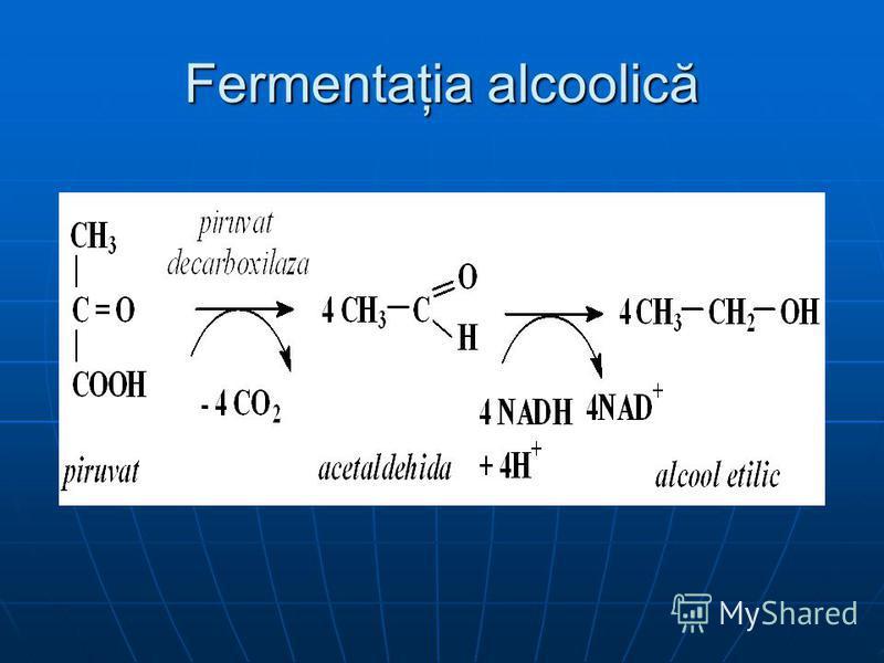Fermentaţia alcoolică