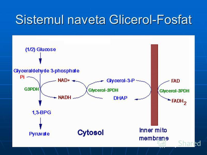 Sistemul naveta Glicerol-Fosfat