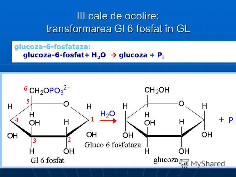 III cale de ocolire: transformarea Gl 6 fosfat în GL glucoza-6-fosfataza: glucoza-6-fosfat+ H 2 O glucoza + P i