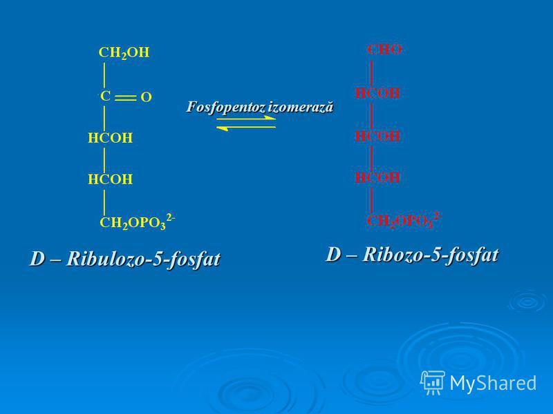 D – Ribulozo-5-fosfat D – Ribozo-5-fosfat Fosfopentoz izomerază