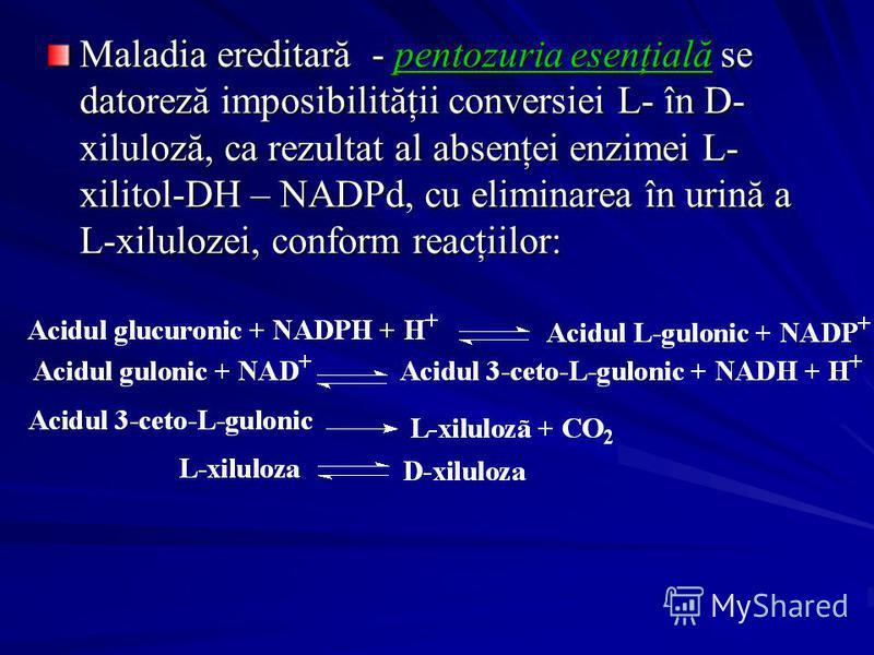 Maladia ereditară - pentozuria esenţială se datoreză imposibilităţii conversiei L- în D- xiluloză, ca rezultat al absenţei enzimei L- xilitol-DH – NADPd, cu eliminarea în urină a L-xilulozei, conform reacţiilor: