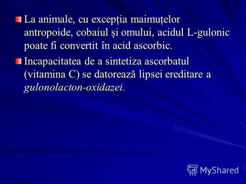 La animale, cu excepţia maimuţelor antropoide, cobaiul şi omului, acidul L-gulonic poate fi convertit în acid ascorbic. Incapacitatea de a sintetiza ascorbatul (vitamina C) se datorează lipsei ereditare a gulonolacton-oxidazei.