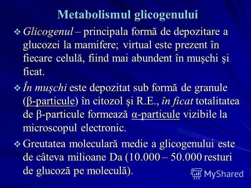 Metabolismul glicogenului Glicogenul – principala formă de depozitare a glucozei la mamifere; virtual este prezent în fiecare celulă, fiind mai abundent în muşchi şi ficat. Glicogenul – principala formă de depozitare a glucozei la mamifere; virtual e