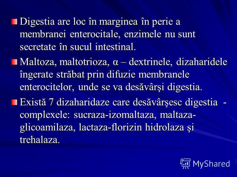 Digestia are loc în marginea în perie a membranei enterocitale, enzimele nu sunt secretate în sucul intestinal. Maltoza, maltotrioza, α – dextrinele, dizaharidele îngerate străbat prin difuzie membranele enterocitelor, unde se va desăvârşi digestia.