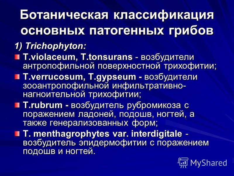 Ботаническая классификация основных патогенных грибов 1) Trichophyton: T.violaceum, T.tonsurans - возбудители антропофильной поверхностной трихофитии; T.verrucosum, T.gypseum - возбудители зооантропофильной инфильтративно- нагноительной трихофитии; T