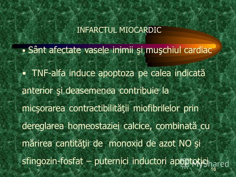 16 INFARCTUL MIOCARDIC Sânt afectate vasele inimii şi muşchiul cardiac TNF-alfa induce apoptoza pe calea indicată anterior şi deasemenea contribuie la micşorarea contractibilităţii miofibrilelor prin dereglarea homeostaziei calcice, combinată cu mări