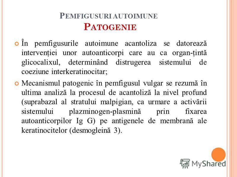 În pemfigusurile autoimune acantoliza se datorează intervenţiei unor autoanticorpi care au ca organ-ţintă glicocalixul, determinând distrugerea sistemului de coeziune interkeratinocitar; Mecanismul patogenic în pemfigusul vulgar se rezumă în ultima a