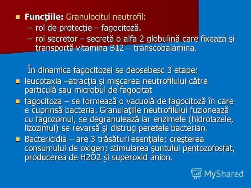 Funcţiile: Granulocitul neutrofil: Funcţiile: Granulocitul neutrofil: –rol de protecţie – fagocitoză. –rol secretor – secretă o alfa 2 globulină care fixează şi transportă vitamina B12 – transcobalamina. În dinamica fagocitozei se deosebesc 3 etape: