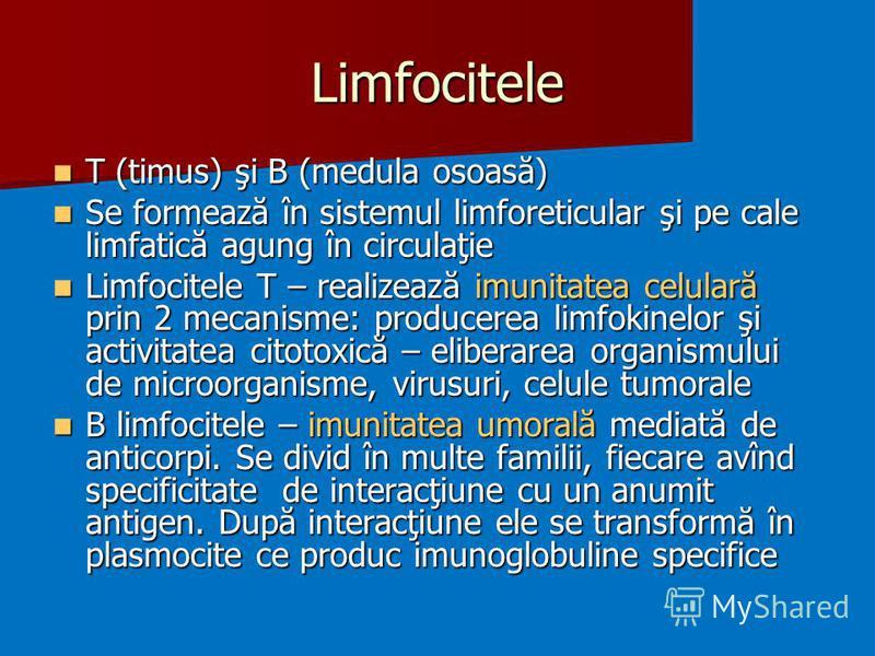 Limfocitele T (timus) şi B (medula osoasă) T (timus) şi B (medula osoasă) Se formează în sistemul limforeticular şi pe cale limfatică agung în circulaţie Se formează în sistemul limforeticular şi pe cale limfatică agung în circulaţie Limfocitele T –