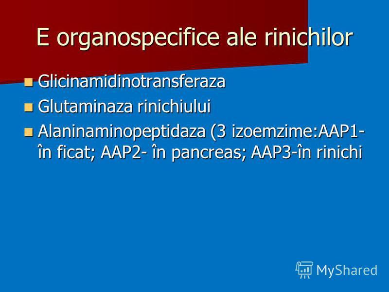 E organospecifice ale rinichilor Glicinamidinotransferaza Glicinamidinotransferaza Glutaminaza rinichiului Glutaminaza rinichiului Alaninaminopeptidaza (3 izoemzime:AAP1- în ficat; AAP2- în pancreas; AAP3-în rinichi Alaninaminopeptidaza (3 izoemzime: