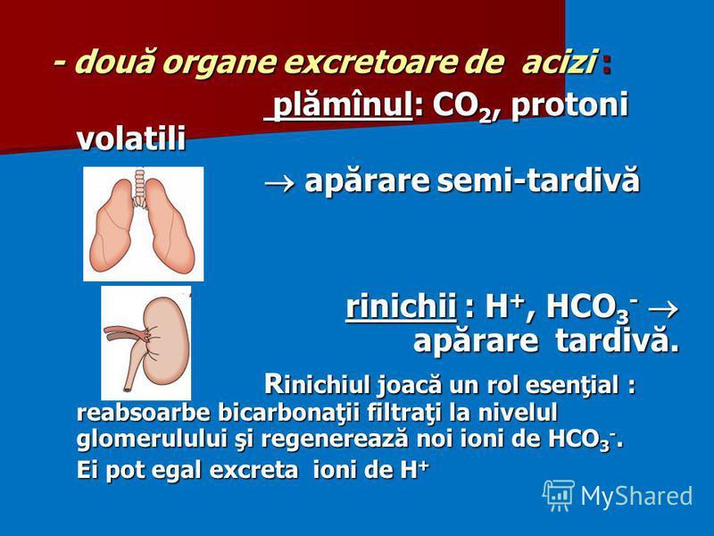 - două organe excretoare de acizi : plămînul: CO 2, protoni volatili plămînul: CO 2, protoni volatili apărare semi-tardivă apărare semi-tardivă rinichii : H +, HCO 3 - apărare tardivă. R inichiul joacă un rol esenţial : reabsoarbe bicarbonaţii filtra