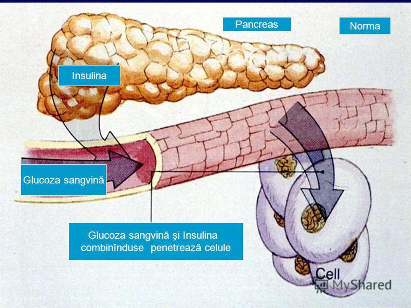 Pancreas Insulina Norma Glucoza sangvină Glucoza sangvină şi Insulina combinînduse penetrează celule