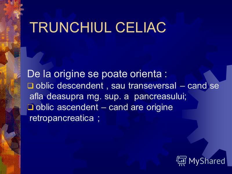 TRUNCHIUL CELIAC De la origine se poate orienta : oblic descendent, sau transeversal – cand se afla deasupra mg. sup. a pancreasului; oblic ascendent – cand are origine retropancreatica ;