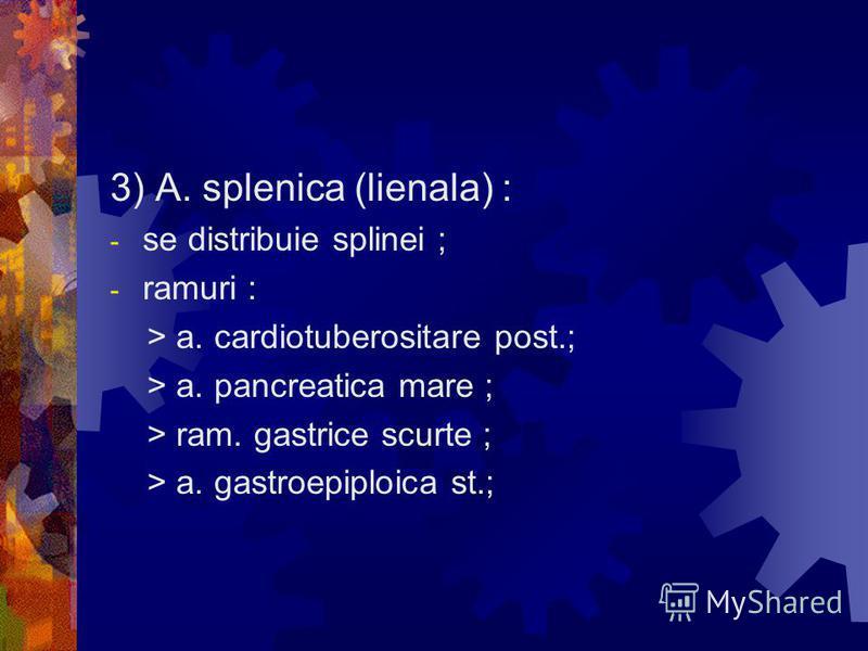 3) A. splenica (lienala) : - se distribuie splinei ; - ramuri : > a. cardiotuberositare post.; > a. pancreatica mare ; > ram. gastrice scurte ; > a. gastroepiploica st.;