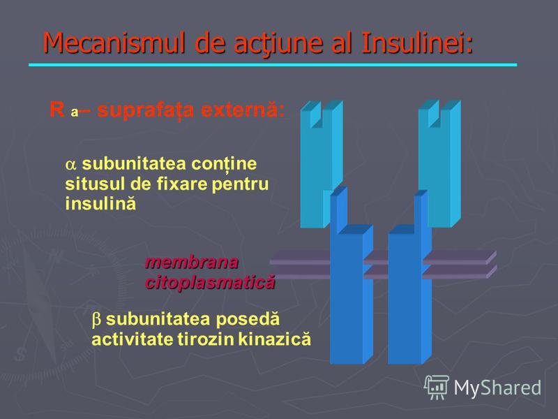 Mecanismul de acţiune al Insulinei: R a – suprafaţa externă: subunitatea conţine situsul de fixare pentru insulină subunitatea posedă activitate tirozin kinazică membrana citoplasmatică
