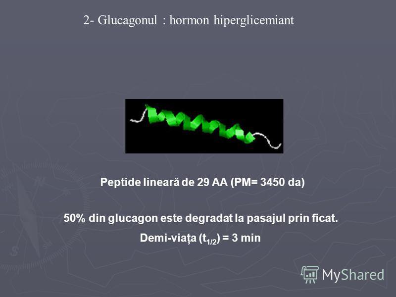 Peptide lineară de 29 AA (PM= 3450 da) 2- Glucagonul : hormon hiperglicemiant 50% din glucagon este degradat la pasajul prin ficat. Demi-viaţa (t 1/2 ) = 3 min