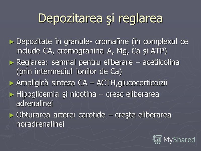 Depozitarea şi reglarea Depozitate în granule- cromafine (în complexul ce include CA, cromogranina A, Mg, Ca şi ATP) Depozitate în granule- cromafine (în complexul ce include CA, cromogranina A, Mg, Ca şi ATP) Reglarea: semnal pentru eliberare – acet