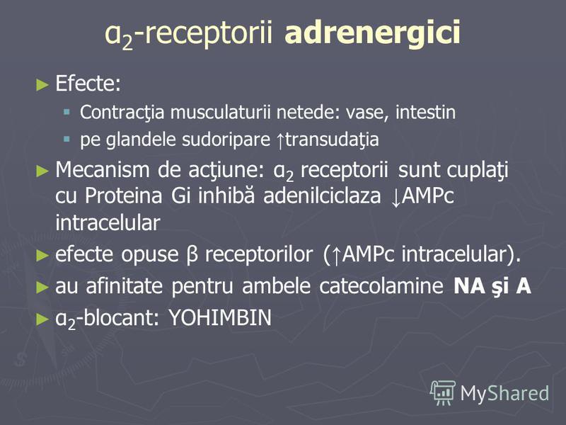 α 2 -receptorii adrenergici Efecte: Contracţia musculaturii netede: vase, intestin pe glandele sudoripare transudaţia Mecanism de acţiune: α 2 receptorii sunt cuplaţi cu Proteina Gi inhibă adenilciclaza AMPc intracelular efecte opuse β receptorilor (