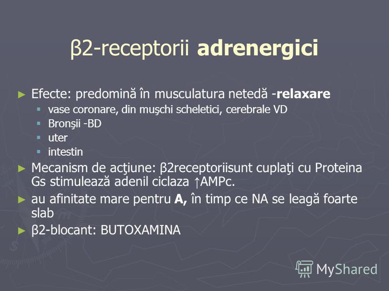 β2-receptorii adrenergici Efecte: predomină în musculatura netedă -relaxare vase coronare, din muşchi scheletici, cerebrale VD Bronşii -BD uter intestin Mecanism de acţiune: β2receptoriisunt cuplaţi cu Proteina Gs stimulează adenil ciclaza AMPc. au a