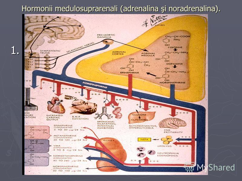 Hormonii medulosuprarenali (adrenalina şi noradrenalina). 1.