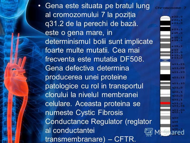 Gena este situata pe bratul lung al cromozomului 7 la poziţia q31.2 de la perechi de bază. este o gena mare, in determinismul bolii sunt implicate foarte multe mutatii. Cea mai frecventa este mutatia DF508. Gena defectiva determina producerea unei pr
