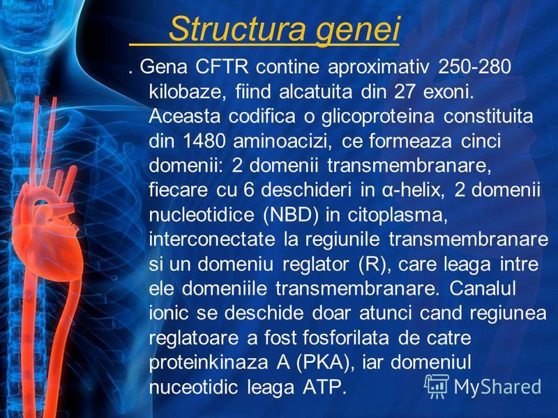 Structura genei. Gena CFTR contine aproximativ 250-280 kilobaze, fiind alcatuita din 27 exoni. Aceasta codifica o glicoproteina constituita din 1480 aminoacizi, ce formeaza cinci domenii: 2 domenii transmembranare, fiecare cu 6 deschideri in α-helix,