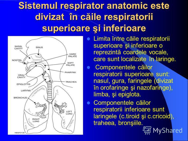Sistemul respirator anatomic este divizat în căile respiratorii superioare şi inferioare Limita între căile respiratorii superioare şi inferioare o reprezintă coardele vocale, care sunt localizate în laringe. Componentele căilor respiratorii superioa