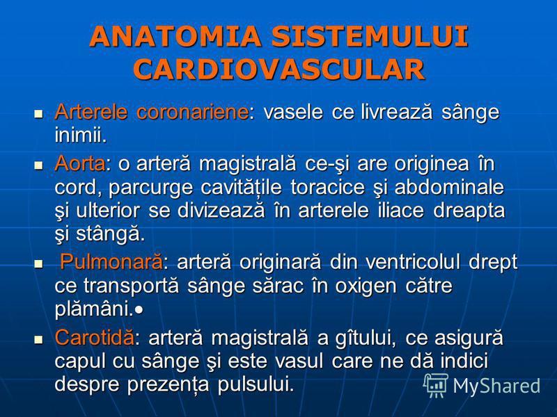 ANATOMIA SISTEMULUI CARDIOVASCULAR Arterele coronariene: vasele ce livrează sânge inimii. Arterele coronariene: vasele ce livrează sânge inimii. Aorta: o arteră magistrală ce-şi are originea în cord, parcurge cavităţile toracice şi abdominale şi ulte