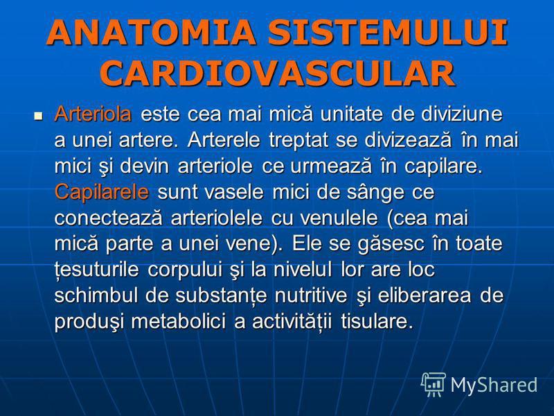 ANATOMIA SISTEMULUI CARDIOVASCULAR Arteriola este cea mai mică unitate de diviziune a unei artere. Arterele treptat se divizează în mai mici şi devin arteriole ce urmează în capilare. Capilarele sunt vasele mici de sânge ce conectează arteriolele cu
