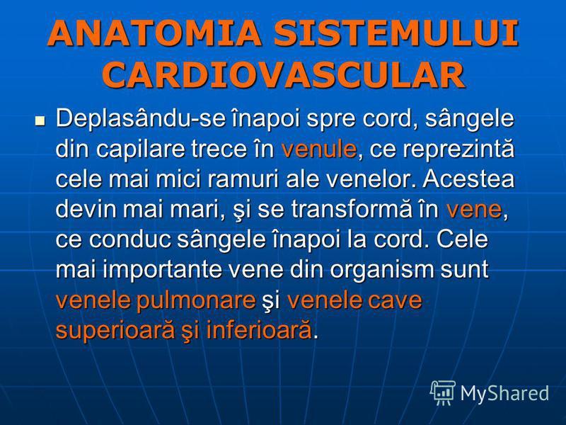 ANATOMIA SISTEMULUI CARDIOVASCULAR Deplasându-se înapoi spre cord, sângele din capilare trece în venule, ce reprezintă cele mai mici ramuri ale venelor. Acestea devin mai mari, şi se transformă în vene, ce conduc sângele înapoi la cord. Cele mai impo