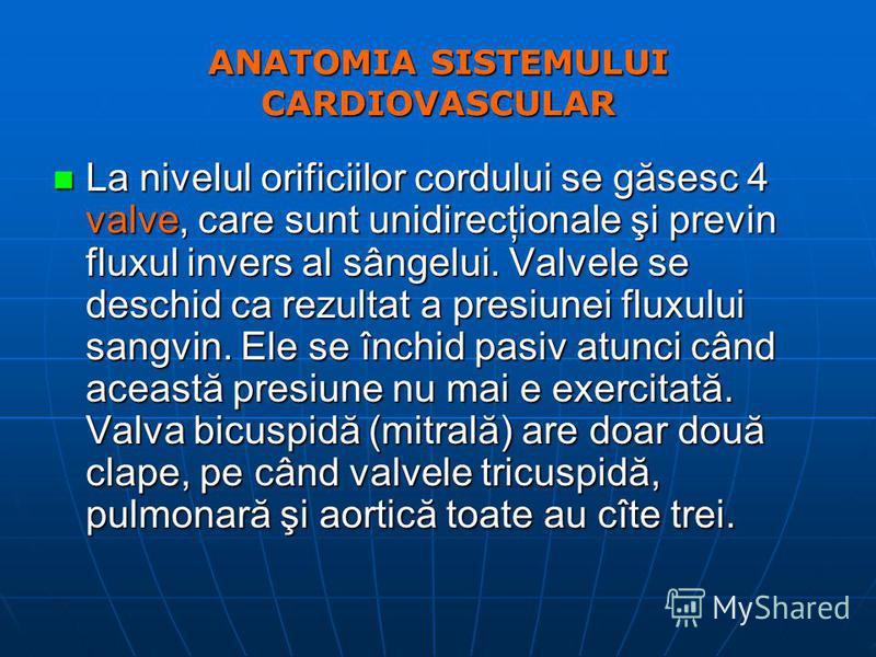ANATOMIA SISTEMULUI CARDIOVASCULAR n La nivelul orificiilor cordului se găsesc 4 valve, care sunt unidirecţionale şi previn fluxul invers al sângelui. Valvele se deschid ca rezultat a presiunei fluxului sangvin. Ele se închid pasiv atunci când aceast