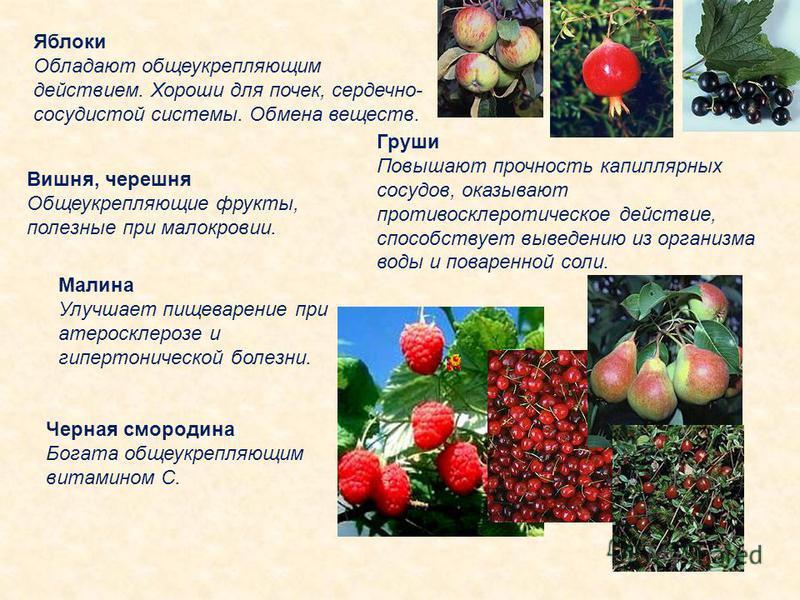 Яблоки Обладают общеукрепляющим действием. Хороши для почек, сердечно- сосудистой системы. Обмена веществ. Груши Повышают прочность капиллярных сосудов, оказывают противосклеротическое действие, способствует выведению из организма воды и поваренной с