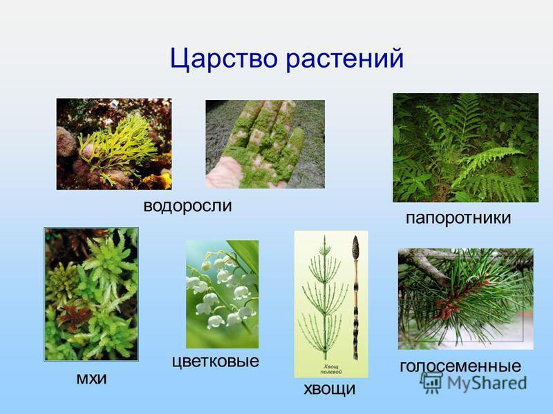 8 из 16 Царство растений водоросли папоротники мхи цветковые хвощи голосеменные